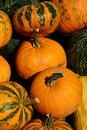 Texture of pile of various mature orange and green to orange striped pumpkins Cucurbita Pepo Royalty Free Stock Photo