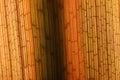 Texture plant fiber leaf Royalty Free Stock Photo