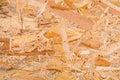 Texture of plywood close up Stock Photos
