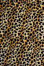 Texture of print fabric stripes leopard for background materials and the Stock Image