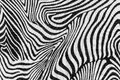 Texture of print fabric stripes zebra for background Stock Photos