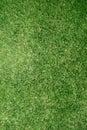 Texture réelle de pelouse d'herbe Image stock