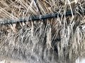 Texture from the sagging dry gray natural beautiful withered diverse rustic old dehydrated texture roof made of grass, straw, hay, Royalty Free Stock Photo