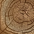 Texture of sawn wood in brown tones vector image