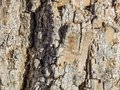 Macro Texture of Tree Bark in the Sun Royalty Free Stock Photo