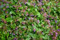 stock image of  Texture of small spring flowers