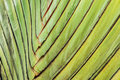 Texture stalk palm background Royalty Free Stock Photo