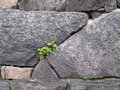 Texture of stone wall for background Stock Photo