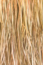 Texture of straw close up background Stock Photography