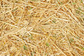 Texture of straw fresh yellow Stock Photography