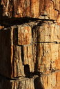Texture of surface of fossil wood Royalty Free Stock Image
