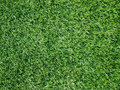 Texture and surface of green turf Stock Images
