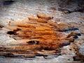 Textúra z drevo korózie vďaka na teplo dážď a hmyz