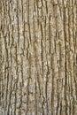 Texture of tree bark Stock Photos