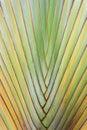 Texture of tree bark. Royalty Free Stock Photo