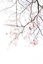 Texture of tree branch and pink flower on white background