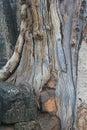 Texture trees.