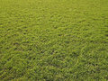 Texture wide green lawn sunlight Stock Images