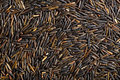 Texture of wild rice the raw Royalty Free Stock Photo