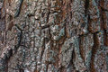A texture of willow bark