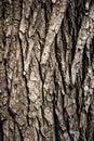 Texture of wood bark close up
