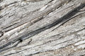 Texture of wood of an old juniper Royalty Free Stock Photo