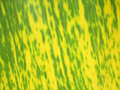 Texture of yellow banana leaf old banana leaf Stock Images