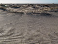 Textured beach sand on a dune Royalty Free Stock Photo