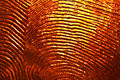 Textured glass a dramatic closeup of orange with light shining through it Royalty Free Stock Images