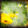 Textured grunge background daisy Stock Photography