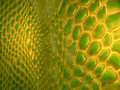 Textured interesting green/yellow surface Royalty Free Stock Image
