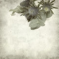 Textured old paper background with blue sea holly Stock Photos