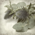 Textured old paper background with blue sea holly Royalty Free Stock Photography