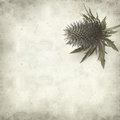 Textured old paper background with blue sea holly Royalty Free Stock Photo