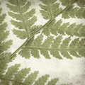 Textured old paper background with green fern leaf Stock Photography