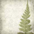 Textured old paper background with green fern leaf Stock Images