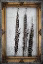 Textured old paper background with guineafowl feather Stock Image
