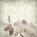 Textured old paper background with light magenta phalaenopsis orchid Royalty Free Stock Photography
