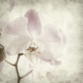Textured old paper background with light magenta phalaenopsis orchid Stock Images