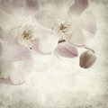 Textured old paper background with light magenta phalaenopsis orchid Royalty Free Stock Images