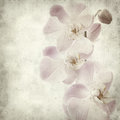 Textured old paper background with light magenta phalaenopsis orchid Stock Photography