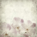Textured old paper background with light magenta phalaenopsis orchid Royalty Free Stock Photo