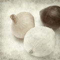 Textured old paper background with mini onions Stock Image