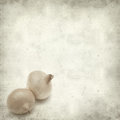 Textured old paper background with mini onions Stock Images