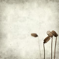 Textured old paper background with mos spore capsules Royalty Free Stock Image