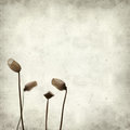 Textured old paper background with mos spore capsules Royalty Free Stock Photos
