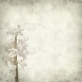 Textured old paper background with opening hyacinth Stock Photography