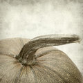 Textured old paper background with pumpkin Royalty Free Stock Images