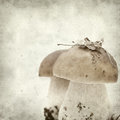 Textured old paper background with twin porcino mushrooms Royalty Free Stock Image