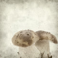 Textured old paper background with twin porcino mushrooms Stock Image